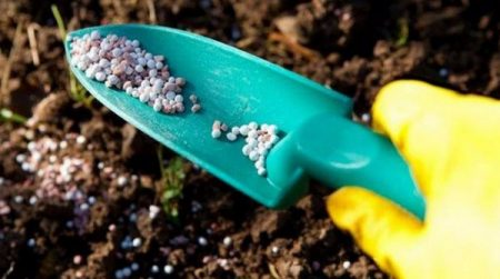 Удобряем почву