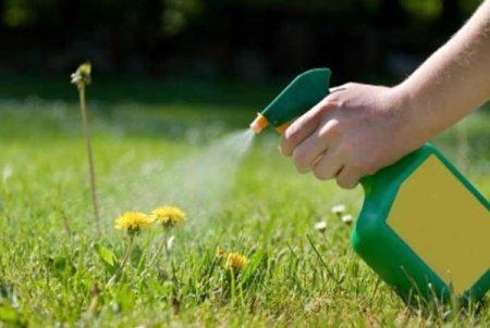 обработка гербицидом