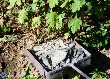 Подкормка растений древесной золой