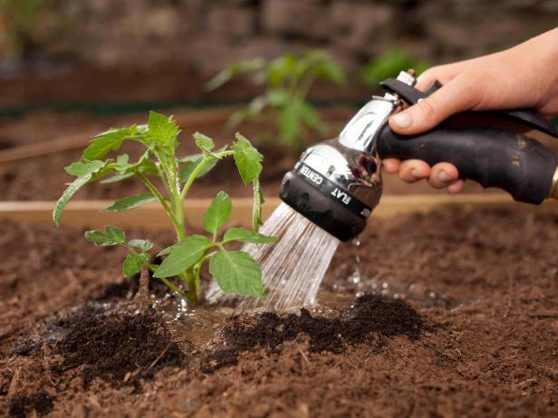 полив помидоров под корень