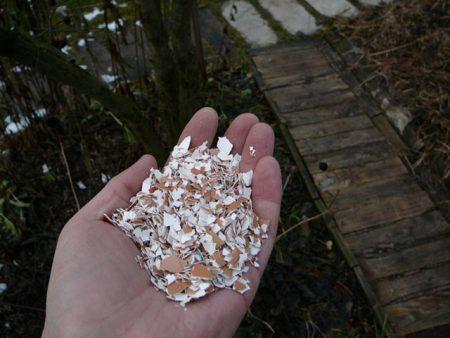 внесение яичной скорлупы под растения