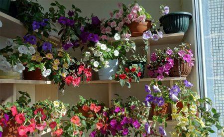 работа комнатными растениями в августе