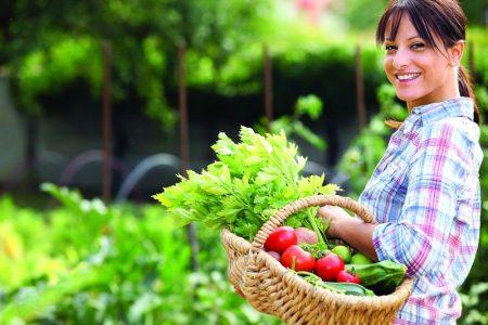 Сбор томатов и огурцов