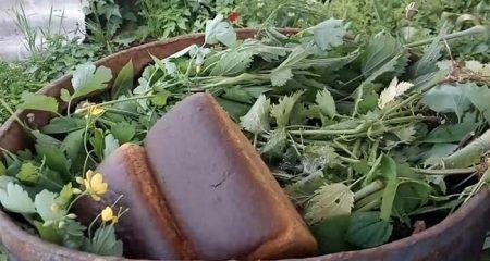 Хлеб с крапивой для томатов