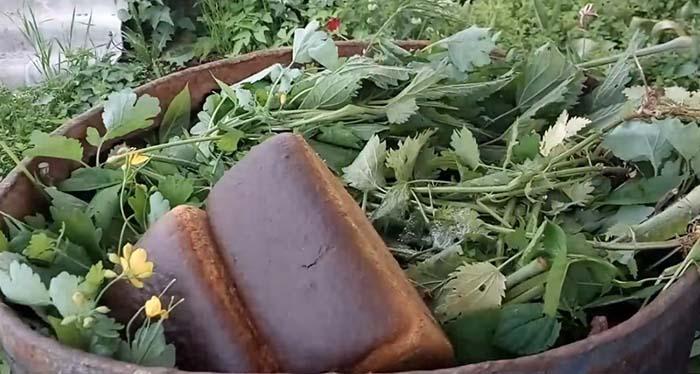 подкормка рассады томатов до пикировки хлебом сухарями