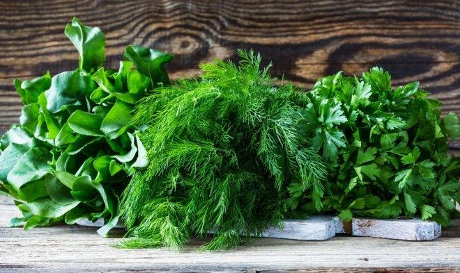 Как сохранить зелень чтобы осталась свежей и не завяла: срок хранения в холодильнике