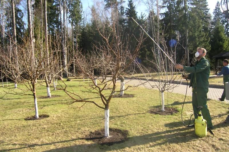 Обработка груши весной