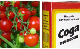 Пищевая сода для томатов