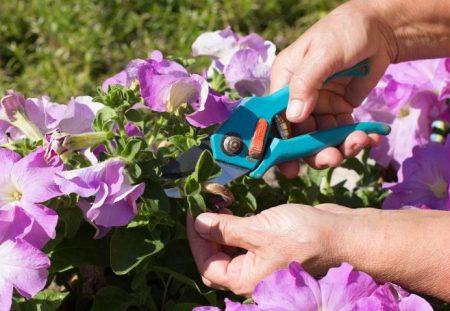 прищипывание во время цветения