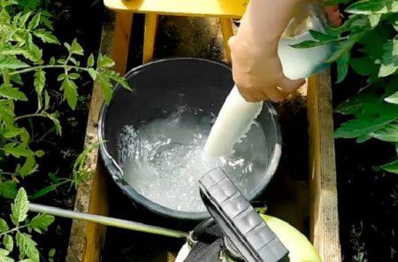 обработка томатов молоком