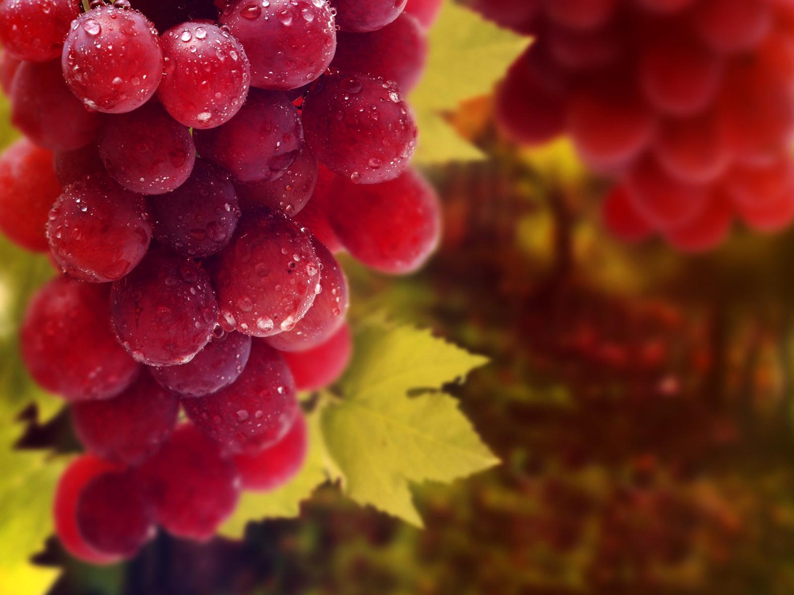 Виноград Бурдака