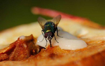муха ест