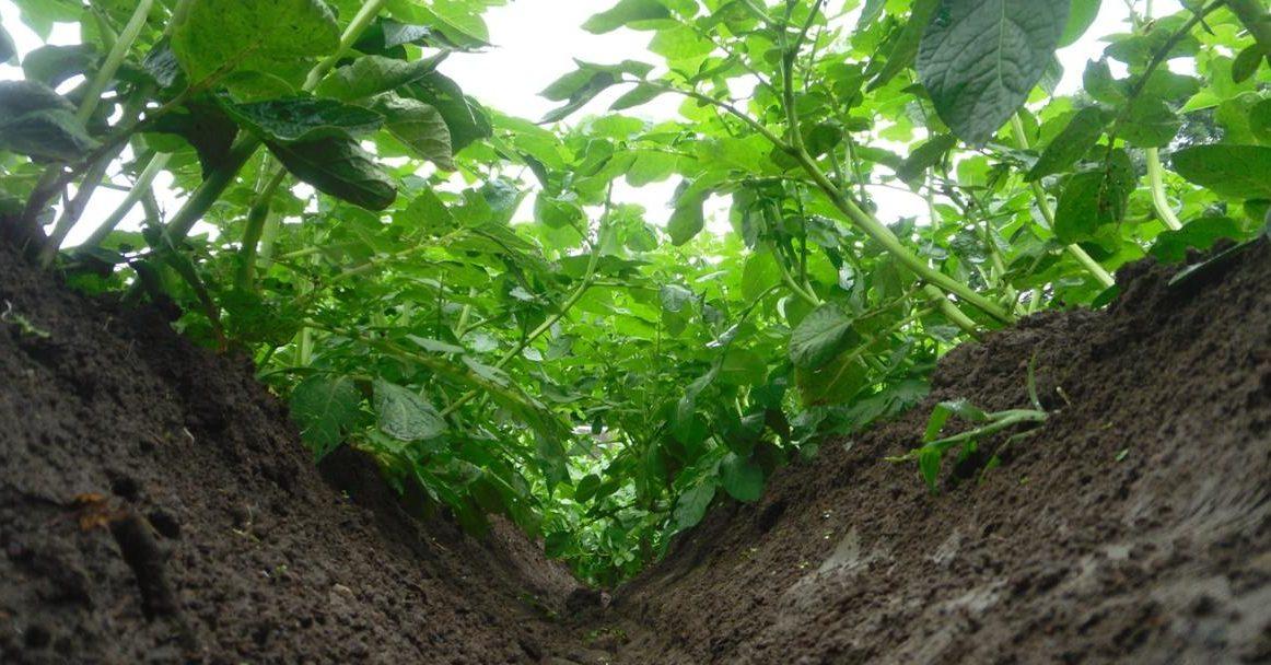 видео шла за картошкой в огород