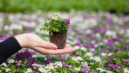 Заварка чая для цветов