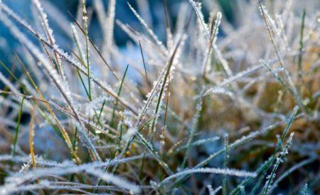 Какую минусовую температуру выдерживает цветная капуста