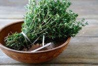 Тимьян: лечебные свойства и противопоказания, польза и вред, сфера применения