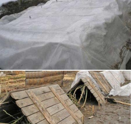 Правильная подготовка винограда к зиме в Подмосковье