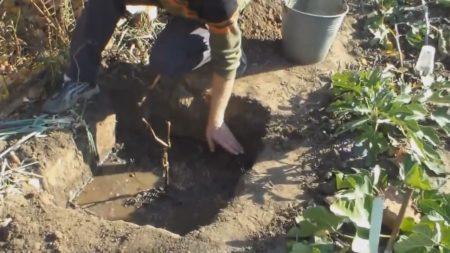 Подготовка посадочной ямы для винограда