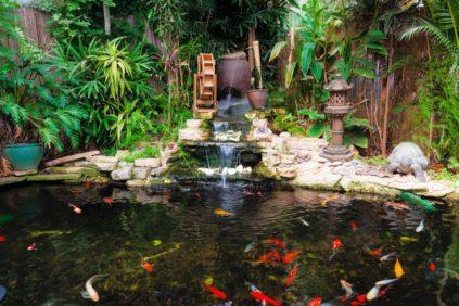 Какую рыбу лучше разводить в искусственном водоеме