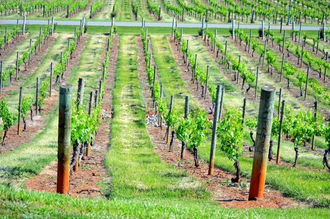 Закладка сучасних інтенсивних садів і виноградників