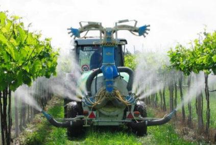 Чем и когда опрыскивать виноград
