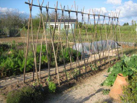 Конструкция для виноградника