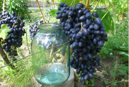 Большие гроздья
