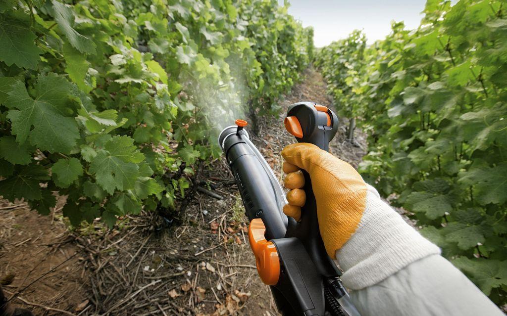 Чем опрыскивать виноград