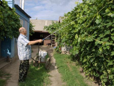 Ранняя обработка винограда