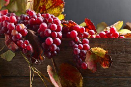 Описание и характеристики винограда сорта Памяти учителя история и плюсы и минусы