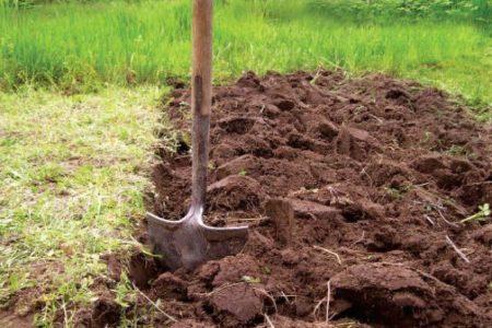 почва для винограда