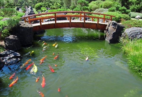 Какую рыбу разводить в пруду на даче