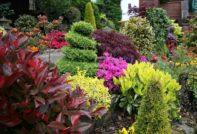 растения сада