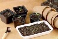 семена с алиэкспресс