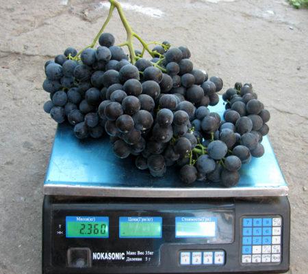 Консул виноград