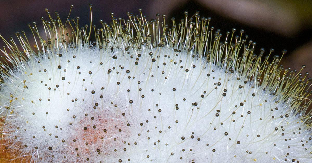 токийский гуль картинки гриба мукор наша продукция уходила