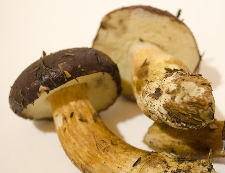 Хранение польского гриба