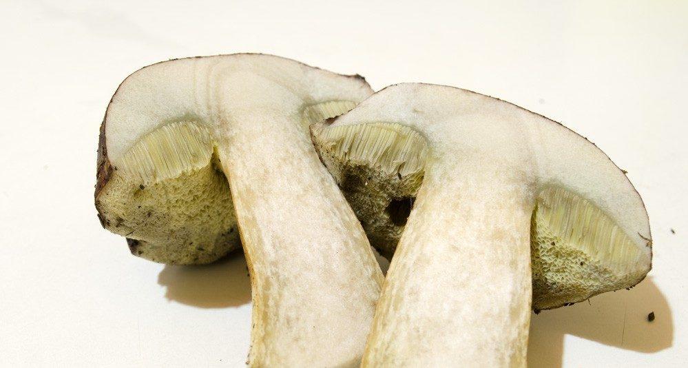 Замачивание польского гриба