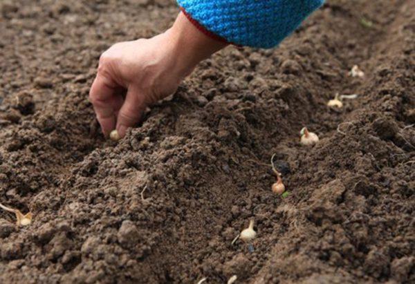 Что можно садить осенью на огороде