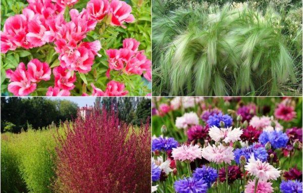 Какие однолетние и многолетние цветы можно посеять осенью под зиму – АГРАРИЙ