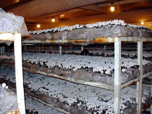 Выращивание грибов в блоках