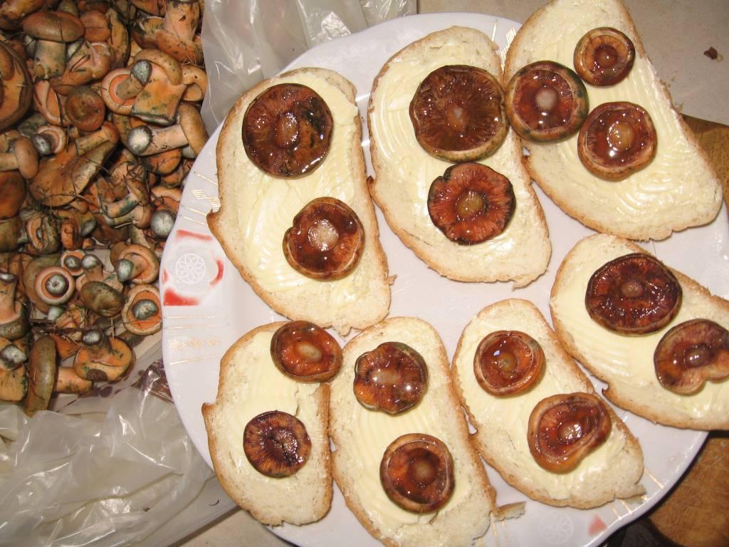Бутерброды с рыжиками
