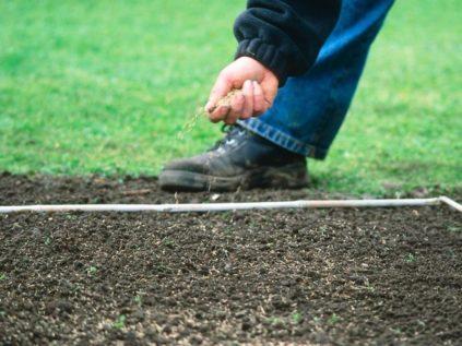 как сеять траву