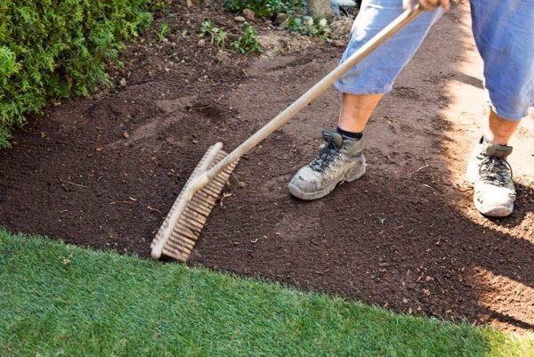 Когда сажают газонную траву осенью или весной
