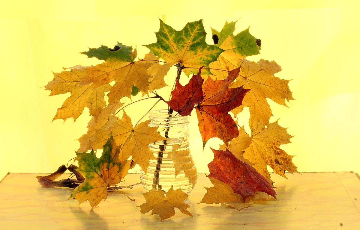 Описание осеннего листа клена