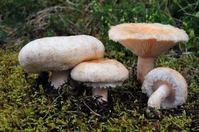 Полезные свойства гриба