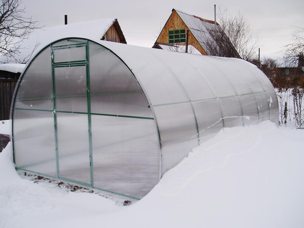 огурцы в теплице зимой