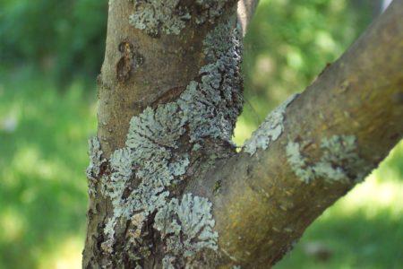 Удобрение мочевина (карбамид): что это такое, применение на огороде и в саду весной, опрыскивание