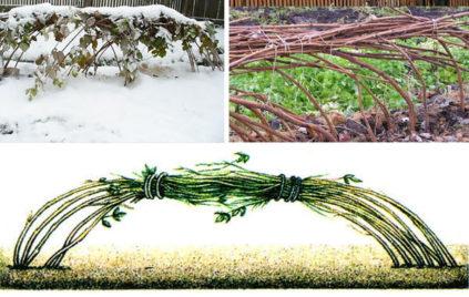 Как укрыть малину на зиму
