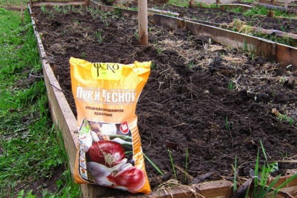 Нужна ли подкормка чесноку, посаженному под зиму
